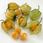 Dictionnaire des fruits du nord et du nord est du br sil - Amour en cage comestible ...