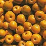 dictionnaire des fruits du nord et du nord est du br sil brasil azur. Black Bedroom Furniture Sets. Home Design Ideas